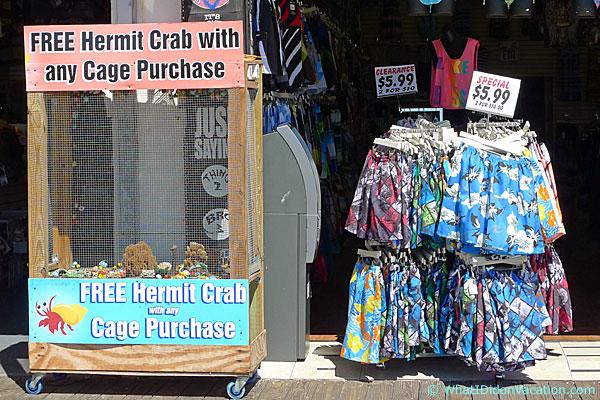 Wildwood Boardwalk hermit crab