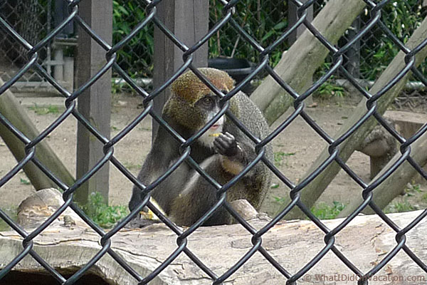 Cape May County Zoo monkey