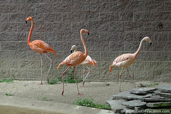 Cape May County Zoo flamingos