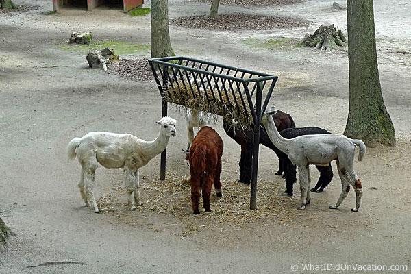 Cape May County Zoo ???